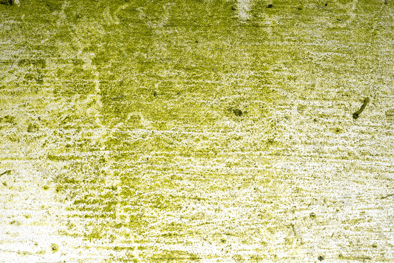 Algae growing on a white painted floor